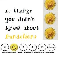 Ten things you didn't know about dandelions