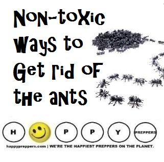 how to get rid of red ants naturally
