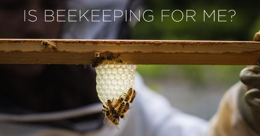 Is Beekeping for me?