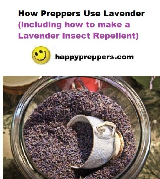How Preppers Use Lavender + how to make a lavender insect repellent