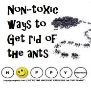 How to get rid of ants non-toxic ways