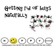 Getting rid of bugs naturally
