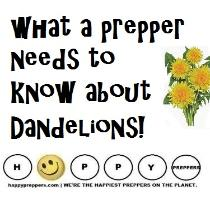 What a prepper needs to know about dandelions