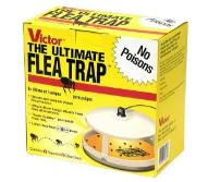 Flea trap to avoid plague infestion by fleas