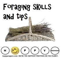Foraging skills and tips